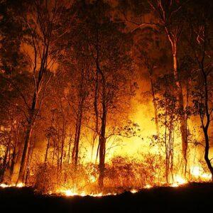Превенция на горските пожари